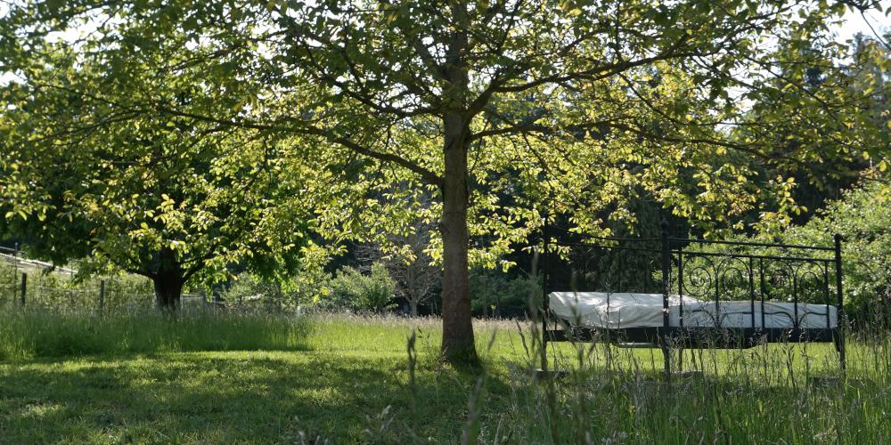 Hier findet hier alle meine Blogartikel zum Thema Garten und gärtnern