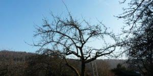 DIY-Anleitung – alte Obstbäume einfach selbst schneiden